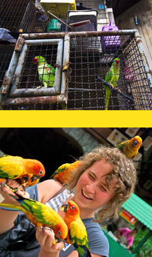 adoption of birds, cages filled with love
